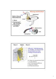 Atmung und Kreislauf a1 a2