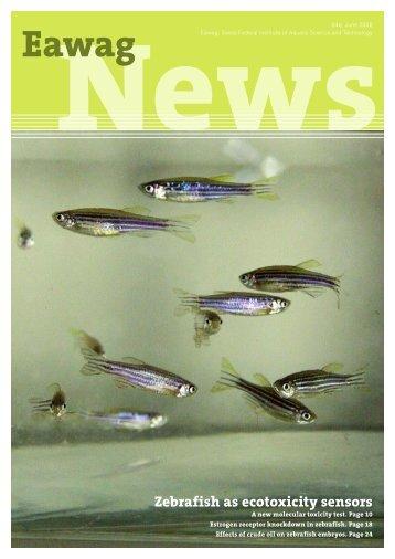 Eawag News 64e: Zebrafish as ecotoxicity sensor