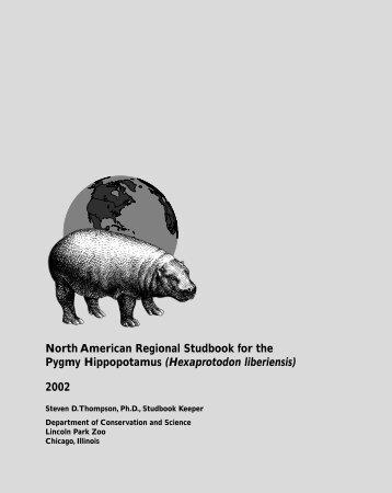Hexaprotodon liberiensis - Library - San Diego Zoo