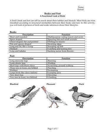 Beaks and Feet