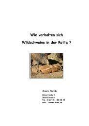 Wie verhalten sich Wildschweine in der Rotte ? - Universität Koblenz ...