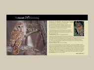Voices of North American Owls - Macaulay Library
