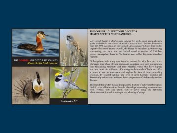 THE CORNELL GUIDE TO BIRD SOUNDS ... - Macaulay Library