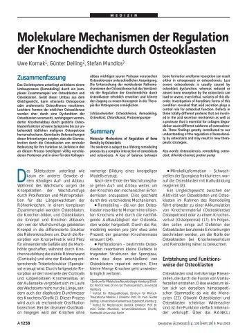 Molekulare Mechanismen der Regulation der Knochendichte durch ...