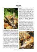 REHBOCK 2012 - Page 2