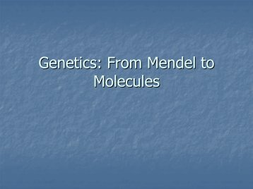 Genetics: From Mendel to Molecules