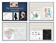 The Neuroscience of Vision III