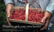 Where to pick your own berries - Cleveland.com