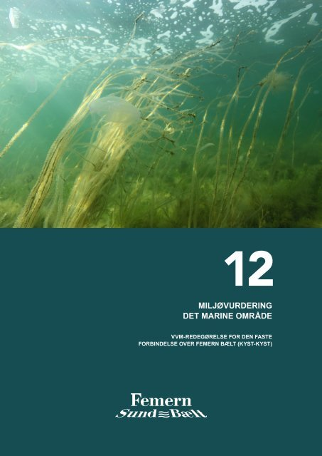 12 Miljøvurdering det marine område