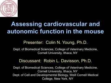 Assessing cardiovascular and autonomic function in the mouse
