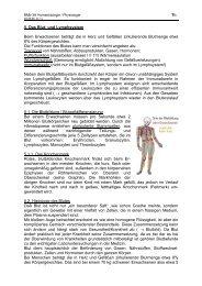 1/8 5. Das Blut- und Lymphsystem Beim Erwachsenen ... - member
