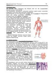 1/4 3.Die Muskulatur : Die bewußte, aktive Bewegung des ... - member