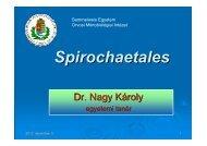 Spirochaetales - Semmelweis Egyetem, Orvosi Mikrobiológiai Intézet