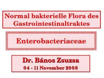 Normal bakterielle Flora des Gastrointestinaltraktes