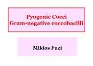 Pyogenic Cocci Gram-negative coccobacilli
