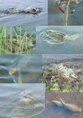 Nr 1121 September 2003 115. Årgang - Lystfiskeriforeningen - Page 4