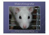 Makrofotografie - WPfoto.de