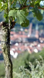 Leseprobe - Mondo Heidelberg