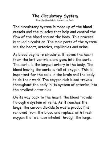 the circulatory system pogil. Black Bedroom Furniture Sets. Home Design Ideas
