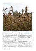 Vårt ansvar för jordens framtid GMO kampen - Biodynamiska ... - Page 7