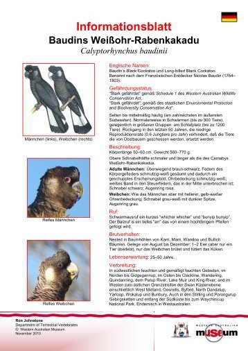 Information Sheet - Baudin's Cockatoo - Western Australian Museum