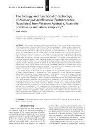 Bivalvia: Protobranchia: Nuculidae - Western Australian Museum