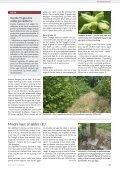 Historisk høje udbytter til moderate priser - Gartneribladene - Page 7