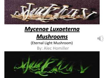 Mycenae Luxaeterna Mushrooms