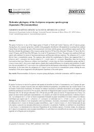 Molecular phylogeny of the Sceloporus torquatus species-group