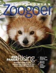 RED PANDA - National Zoo