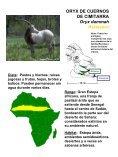 Dieta - National Zoo - Page 4