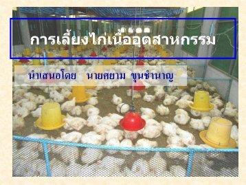1. การผลิตไก่เนื้ออุตสาหกรรม