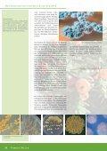 INFEKTIONEN - Naturstoff-forschung.info - Page 5