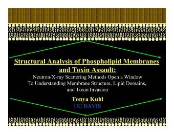 Structural Analysis of Phospholipid Membranes and Toxin Assault: