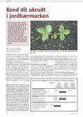Frederiksdal vil lave verdens bedste kirsebærvin - Gartneribladene - Page 4