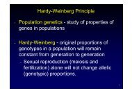 Hardy-Weinberg Principle • Population genetics - study of properties ...