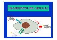 MEMBRANE TRASDUZIONE 1