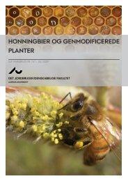 honningbier og genmodificerede planter - PURE - Aarhus Universitet