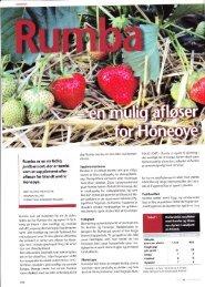 jordbarsort, der er tenkt - Fragaria Holland