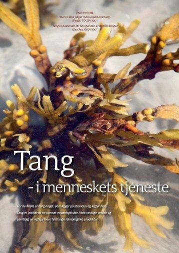 Tang i menneskets tjeneste - Memphys