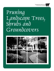 Pruning Landscape Tree, Shrubs and Groundcovers - UT Extension ...