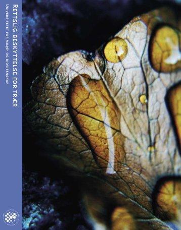 Rettslig beskyttelse for trær - UMB
