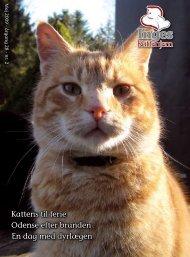 katte - Inges Kattehjem