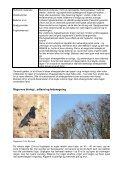 Forebyggelse af rågeskader – specielt i økologisk ... - LandbrugsInfo - Page 4