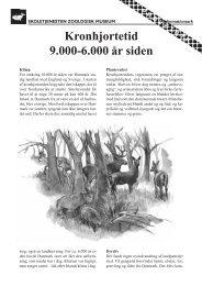 Kronhjortetid 9.000-6.000 år siden - Skoletjenesten
