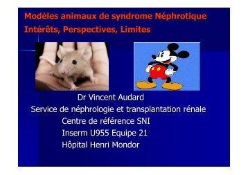 Modèles animaux de syndrome Néphrotique