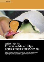 En unik måde at følge arktiske fugles trækruter på - Elbo