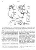 Review of Mites of the Genus Boletoglyphus ... - Insect Division - Page 3
