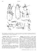 Review of Mites of the Genus Boletoglyphus ... - Insect Division - Page 6