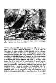 Sterna, bind 11 nr 4 (PDF-fil) - Museum Stavanger - Page 5